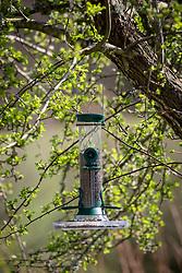 Bird seed feeder with goldfinch