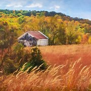 Antique barn sits on hilltop among russet colored tall prairie grasses and autumn foliage, central Ohio.