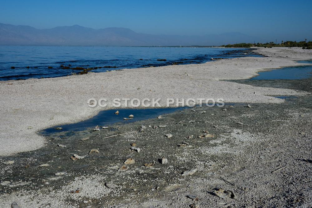 Desolate Salton Sea Beach