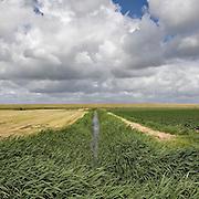 Nederland Walsoorden   gemeente Hulst  19 juni 2010 20100619      .. Serie landschappen provincie Zeeland. Zeeuws-Vlaanderen, landschap polderlandschap scenery met op de achtergrond de dijk van de westerschelde.   wisselvallig veranderlijk weer. Op de voorgrond een watergang met rietkraag, riet. Illustratief beeld  waterveiligheid, hollandse landschappen en luchten. , skies, sloot, space, sprankelend, sprankelende, stijging zeespiegel, stil, stilleven, stilte, stock, stockbeeld, streek, sunny, sustainable, terrein, typerend, typical dutch landscape, typisch hollands, typisch hollands landschap, typische, uitgestrektheid, uitzicht, uniek, unieke, veiligheid, veld, vergezicht, vergezichten, verte, vrij, vrijheid weer, waaien, water level, waterbeheer, Waterbeheerplan, watergang, waterhuishouding, waterkering, Waterkeringen, waterkeringen, waterlevel, watermanagement, waterniveau, waterpeil, waterplan, waterproblematiek, waterstaatkundige, waterstand, watersysteem, waterveiligheid, waterveiligheid en gebiedsontwikkeling, waterwerken, weersomstandigheden, wei, weide, weidegang, weiland, weiland. Landscape, wijdheid, wijds, wijdsheid, wind, wit, witte, wolk, wolken, wolkenpartij, zeeland, zeeuws vlaanderen, zeeuws-vlaanderen, zeewering, zo vrij als een vogel, zonnig, zonnige dag, zware, zwitserleven gevoel ..Foto: David Rozing