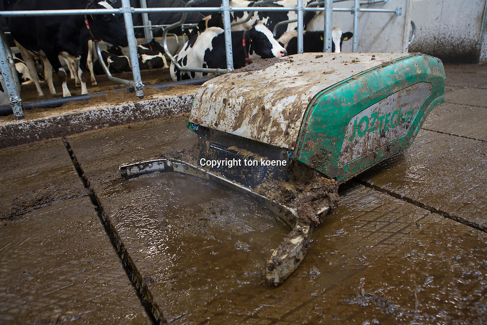 Manure robot cleans manure in a dairy stable