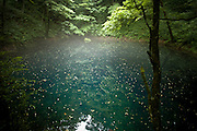 AOMORI KEN, JAPAN - Ao Mizuumi - That blue lake have a natural blu color. It's quite small and under the trees. The atmosphere is unrealist. - August 2005 ***[FR]***  Lac bleu dans la prefecture d'Aomori. Sa couleur est naturelle et fortement prononcee.
