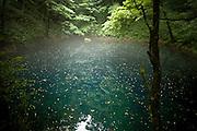 AOMORI KEN, JAPAN - Ao Mizuumi - That blue lake have a natural blu color. It's quite small and under the trees. The atmosphere is unrealist. - August 2005 ***[FR]***  Lac bleu dans la prefecture d'Aomori. Sa couleur est naturelle et fortement prononcee.