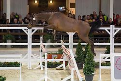 044, Nathan vd Heffinck<br /> BWP Hengsten keuring Koningshooikt 2015<br /> © Hippo Foto - Dirk Caremans<br /> 21/01/16