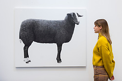 "© Licensed to London News Pictures. 21/01/2020. LONDON, UK. A staff member views ""Zwartbles Sheep"", 2019, by John Delafield Cook. Preview of London Art Fair at the Business Design Centre in Islington.  Over 100 galleries are offering works, including museum-quality modern and contemporary art from internationally renowned artists and emerging artist, to collectors in a show which runs 22-26 January 2020.  Photo credit: Stephen Chung/LNP"