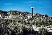 Bird house in coastal sand dunes, Outer Banks, North Carolina, USA