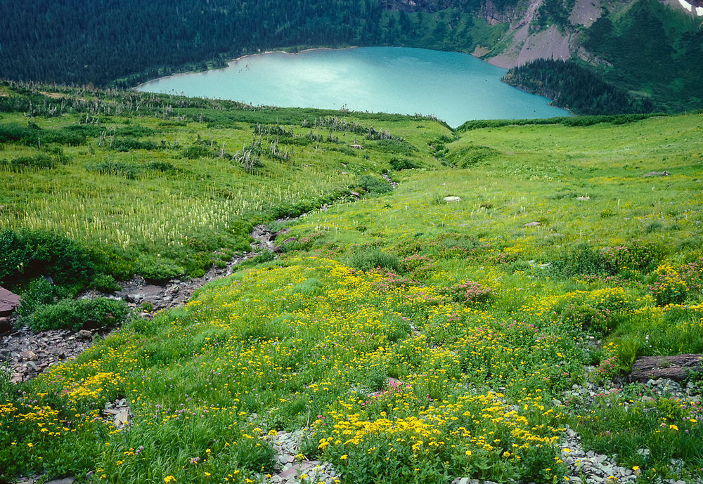 Grinnell Lake, wildfloer meadow, summer, Glacier National Park, Montana, USA