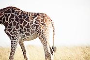 Africa: Masai Mara Reserve