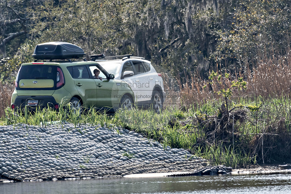 Tourists catch a peak of an American alligator basking along the riverbank from the safety of their cars at the Donnelley Wildlife Management Area March 11, 2017 in Green Pond, South Carolina. The preserve is part of the larger ACE Basin nature refugee, one of the largest undeveloped estuaries along the Atlantic Coast of the United States.