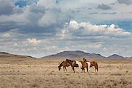 Horses, Navajo Reservation, Arizona