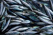 Banda Neira Fish Market<br /> Banda Neira Island<br /> Banda Sea<br /> Indonesia