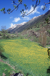 Meadow in the Pyrenees near Espot in the Parque National des Aigues Tortes,