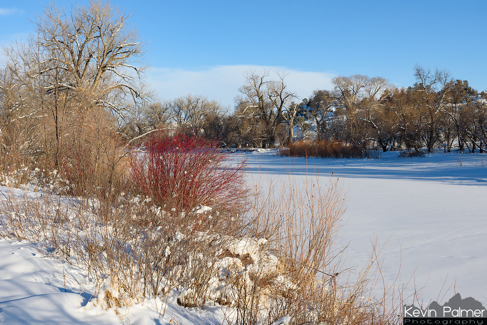 A bright red bush adds some color to the banks of the frozen Tongue River.