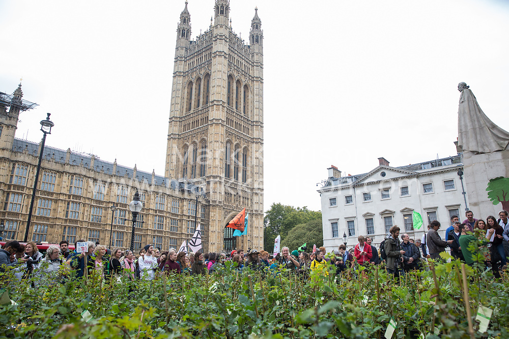 London, UK. 8 October, 2019. Extinction Rebellion activists create a fledgling forest of potted native trees outside Parliament as part of an initiative named Reforest Earth. They were then presented to MPs to call on the government to plant billions of trees across the UK and support the planting of trillions more around the world.