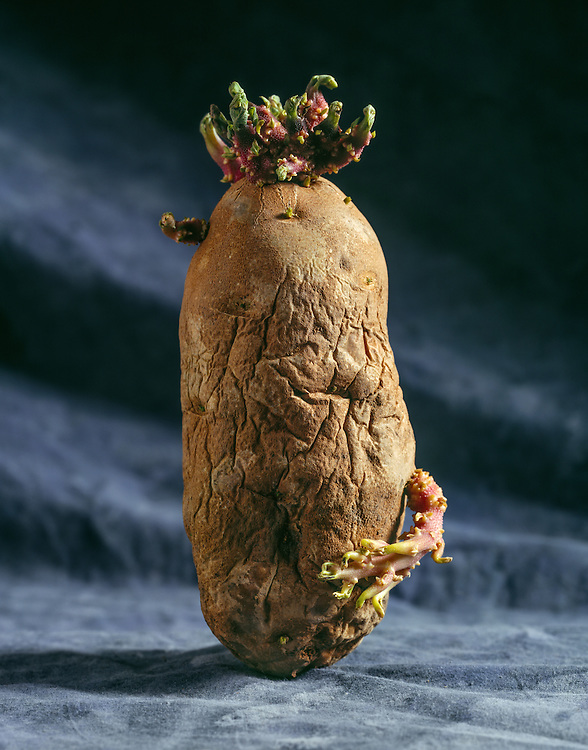 Edition of 75 includes all sizes<br /> Potato Still Life Going to Seed. First image in the Potato Series