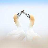 Seabirds April 2019