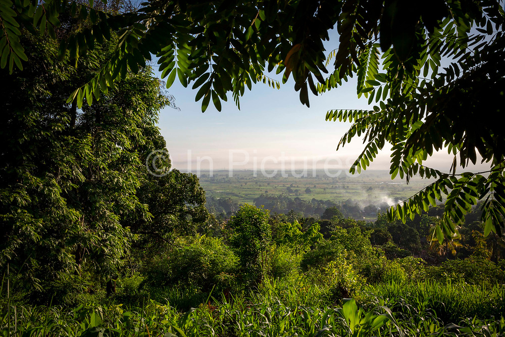 Looking through the trees at sunrise and the early morning mist over the plains on the 20th November 2019 in Mvomero district, Morogoro region, Tanzania.