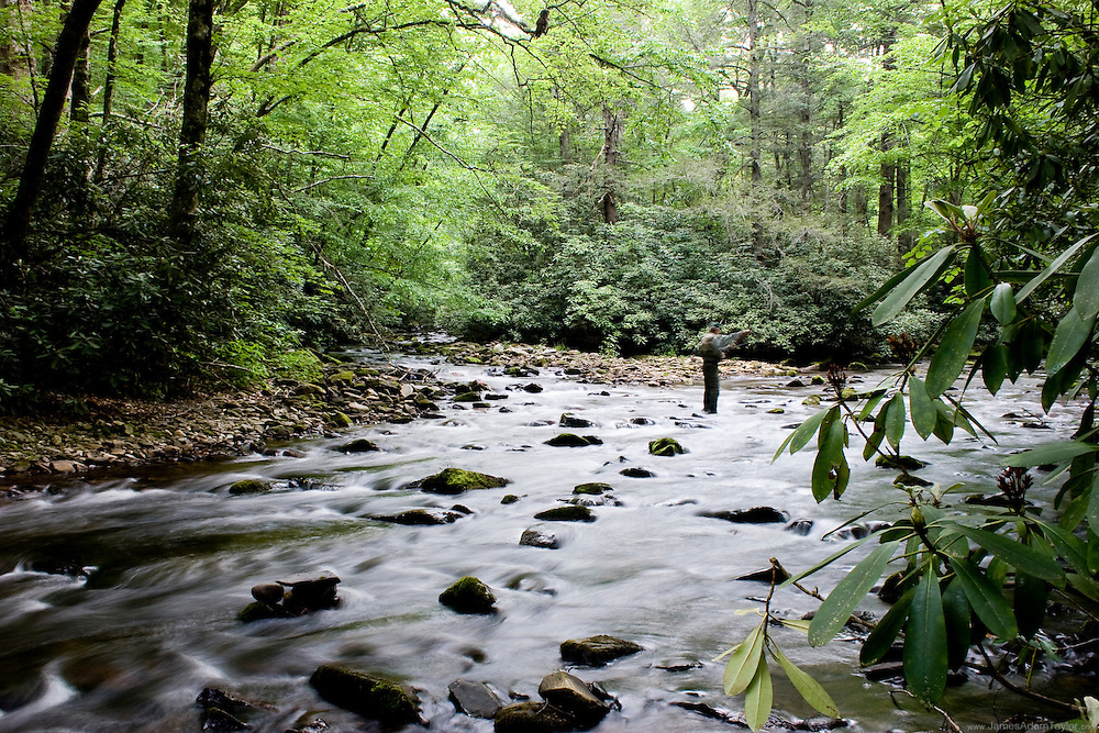 An Owl perches among the branches asa man fly fishes in one of the many rich streams of the Smokey mountains national park.