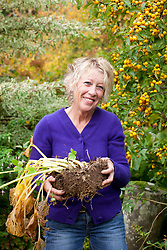 Dividing a hosta. Carol Klein lifting out a wedge shaped slice ready to replant