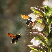 Bumblebee flower business
