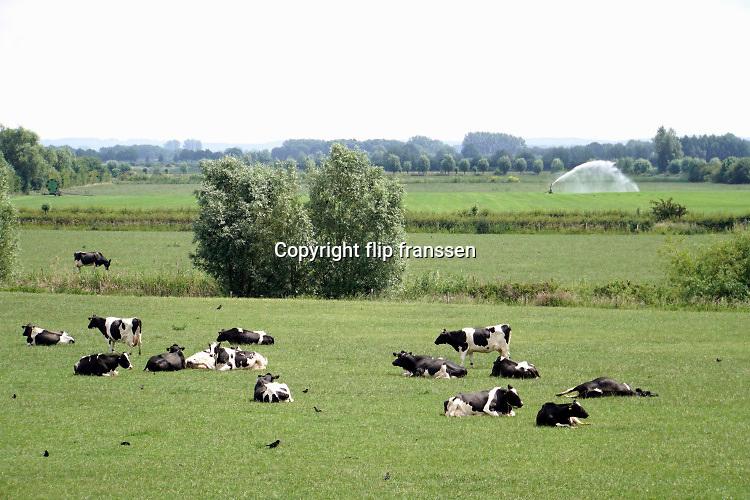Nederland, Persingen, 11-6--2020 Koeien, in de wei in de ooijpolder .Foto: Flip Franssen