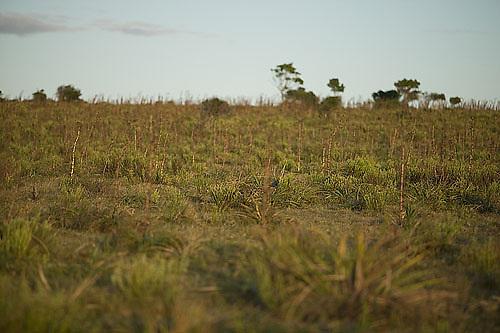 South America, Uruguay, Rocha, Parque Nacional Santa Teresa, Estacion Biologica Potrerillo de Santa Teresa, grassland