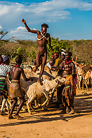 Hamer tribe bull jumping ceremony (Ukuli Bula), which is a rite of passage initiating a boy into manhood. The boy must run (nude) back and forth twice across the backs of a row bulls or castrated steers. Omo Valley, Ethiopia.