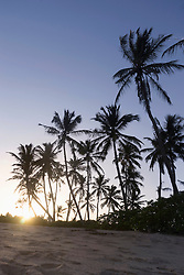 Palm trees at sunset, Tangalle, South Province, Sri Lanka