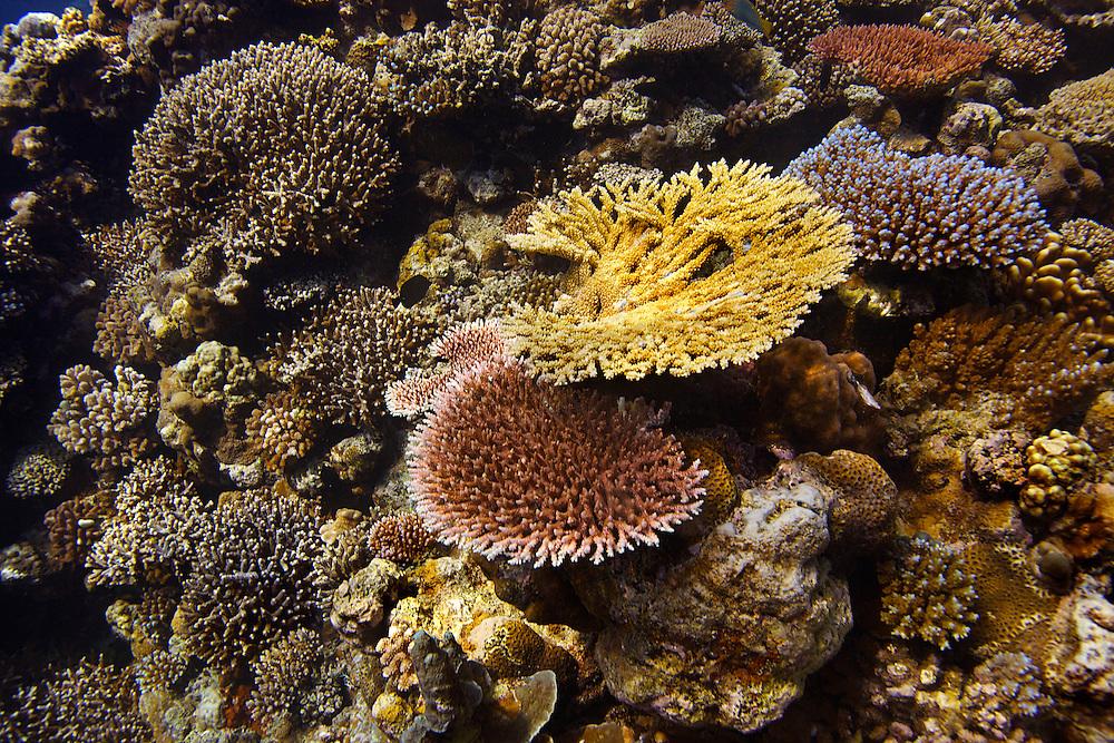 15/February/2013 Western Austraila.Clerke Reef, rowley shoals..©JOAN COSTA