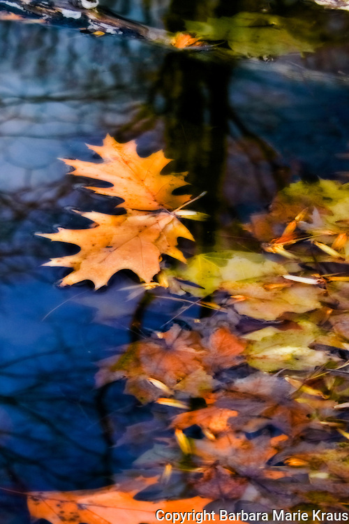 Leaves and water reflection abstracts