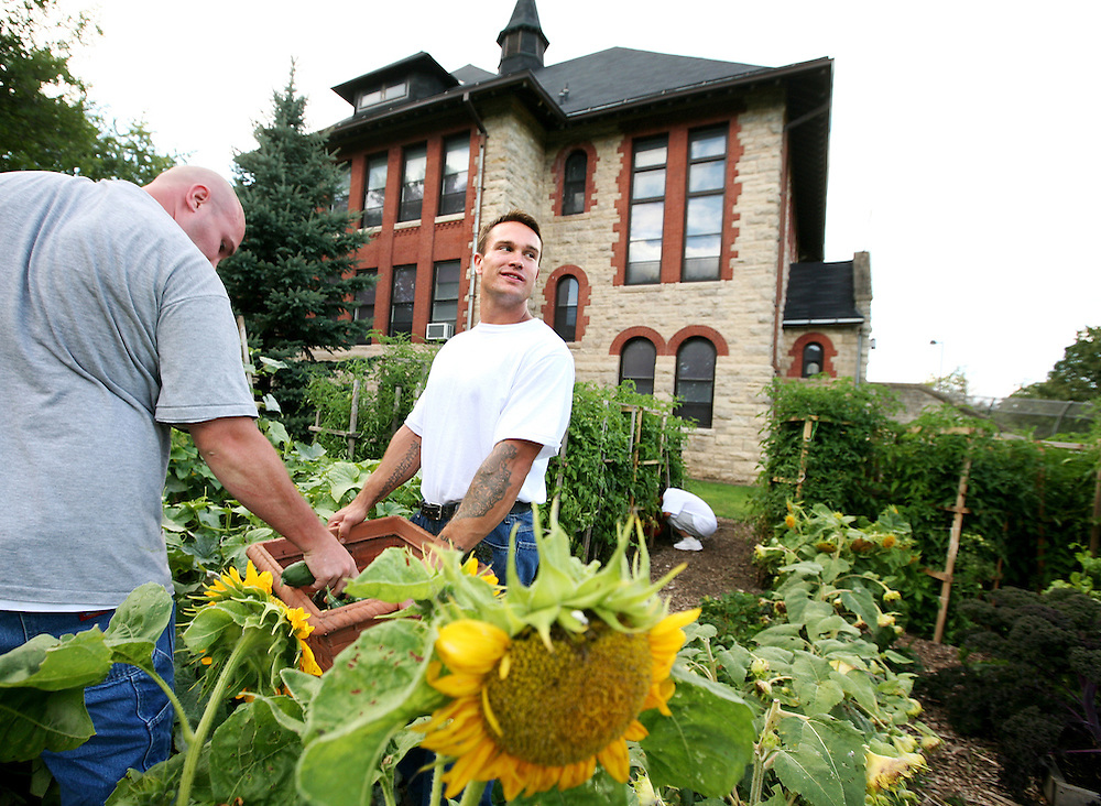 Left to right, inmates Justin Swanson, Nick Kennedy and Hlee Vang harvest vegetables in the garden at the Minnesota Correctional Facility in Red Wing August 20, 2012.