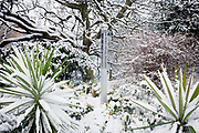 A Peace Garden pillar in a quiet corner of Dulwich Park, Southwark, south London during mid-winter snow. The column stands vertically surrounded by two Cabbage Palms (cordyline) and trees in this Victorian-designed public space. The words 'May Peace Prevail on Earth' are written along the post, the translation being in Japanese. Dulwich Park is a 29 hectare (72 acre) park in Dulwich in the London Borough of Southwark, south London, England. The initial design was by Charles Barry (junior), later refined by Lt Col J J Sexby (who also designed Battersea and parts of Southwark Parks). It was opened in 1890 by Lord Rosebery. In 2004–6, the park was restored to its original Victorian layout, following a grant from the Heritage Lottery Fund.