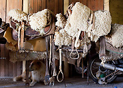 Detail shot of saddles and stirrups, in the stables with a sheepdog sitting underneath. Working Gaucho Fazenda in Rio Grande do Sul, Brazil.