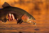 Spin Fishing