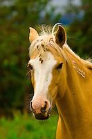 Mustangs, Black Hills Wild Horse Sanctuary near Hot Springs, South Dakota USA