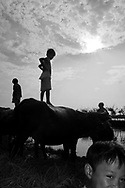 A little vietnamese boy stands on a buffalo close to a river in the area of Hue, Vietnam, Asia