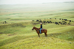 "Researcher Marisa Lipsey works with The Nature Conservancy in Eastern Montana  at the Matador ranch ""grass bank"". The ""grass bank"" is an innovative way to leverage conservation gains, in which ranchers can graze their cattle at discounted rates on Conservancy land in exchange for improving conservation practices on their own ""home"" ranches. In 2002, the <br /> Conservancy began leasing parts of the ranch to neighboring ranchers who were suffering from  severe drought, offering the Matador's grass to neighboring ranches in exchange for their  participation in conservation efforts. The grassbank has helped keep ranchers from plowing up native grassland to farm it; helped remove obstacles to pronghorn antelope migration; improved habitat for the Greater Sage-Grouse and reduced the risk of Sage-Grouse colliding with fences; preserved prairie dog towns and prevented the spread of noxious weeds. (Photo By Ami Vitale)"