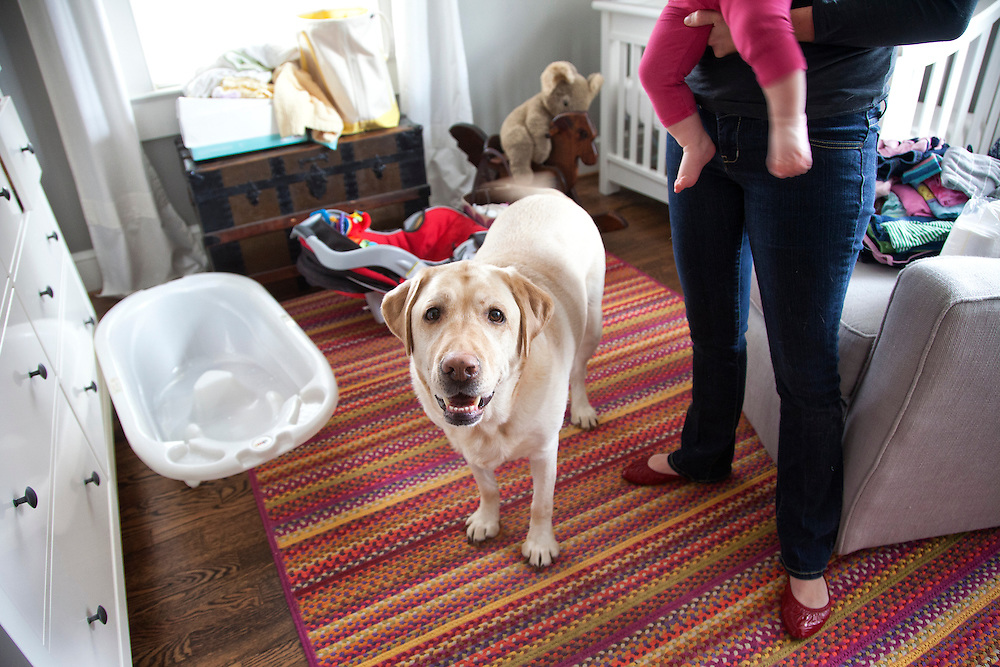 A yellow labrador stands in his baby's room.