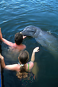 Tourists play with a bottle nose dolphin at the Dolphin Research Center  June 27, 1996 in Marathon Key, FL.  The center is where the original Flipper was trained and specializes in returning trained dolphins to the wild.