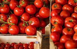 THEMENBILD - verschiedene Tomaten Sorten bei einem Markt, aufgenommen am 28. Juni 2018 in Fazana, Kroatien // different tomato varieties at a Market, Fazana, Croatia on 2018/06/28. EXPA Pictures © 2018, PhotoCredit: EXPA/ JFK