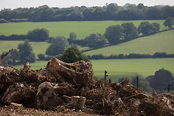 Tree stumps and roots from ancient woodland at Jones Hill Wood in Buckinghamshire are pictured as clearance works for the HS2 high-speed rail link continue on 16th June 2021 in Wendover, United Kingdom. A large section of the ancient woodland, which contained resting places and/or breeding sites for pipistrelle, barbastelle, noctule, brown long-eared and natterer's bats, has now been entirely cleared of trees and vegetation by contractors working on behalf of HS2 Ltd.