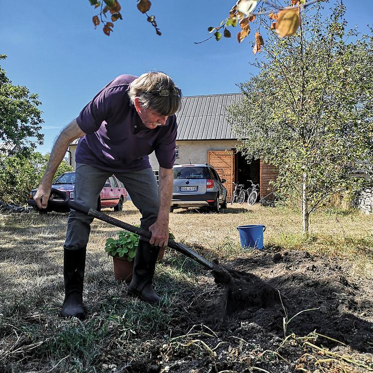 Bror min tar upp potatis på Odvalds.<br /> PHOTO © Bernt Lindgren