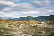 In Dunes | A pair of paradise shelducks (Tadorna variegata), The Southern Circuit, Stewart Island / Rakiura, New Zealand Ⓒ Davis Ulands | davisulands.com