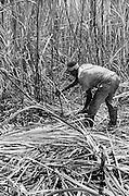 Cane Worker