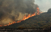 Greeley Hill, California - July 28, 2008- Wildfires Threaten Yosemite National Park .Fire rips up hill in part of Division M of   Branch Three of the Telegraph Fire  Monday afternoon.  This part of the fire is on the north side of the Merced River and is heading toward the community of Greeley Hill. .Photo by Al GOLUB/Golub Photography.