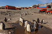 Penguins sit in a puddle on Argentinean base Esperanza in the Antarctic peninsula, on February 7, 2020. On February 6, record high temperature of 18,3 degrees had been measured on the meteorological station of the base.