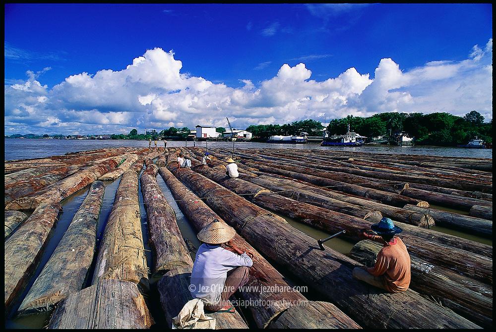 Giant tropical hardwood logs arriving at a plywood factory near Samarinda, East Kalimantan, Indonesia.