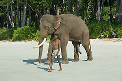Rajan, a bull Asian Elephant, Elephas maximus, strolls with his mahout, or trainer, towards the water's edge for a morning swim.  Judging by his impressive body language, it would appear that he is quite excited about the prospect! Radhanagar Beach, a.k.a. Beach #7; Havelock Island; Andaman Islands; India