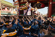 Tokyo, Asakusa - Le Sanja Matsuri est l'un des trois grands festivals de Tokyo, considéré comme le plus important. Le samedi, environ une centaine de mikoshi, sancturaires shinto portables, des divers sanctuaires des 44 quartiers d'Asakusa sont portés par leur membres jusqu'au célébre Senso-ji (sancturaire Kannon) pour être benni et purifié par un pretre shintoiste. Le dimanche, tous les membres se retrouvent dans ce même sanctuaire pour pourter les trois grands mikoshi du Senso-ji à travers les rue d'Asakusa. Ils traversent la porte Kaminarimon (le portail du Tonnere) et rejoignent les 44 quartiers d'Asakusa. [EN] The sanja matsuri is one of the greatest festival in Tokyo. Held on the third week end of june, in Asakusa Shrine known as Senso-ji. On saturday, about One hundred (100) mikoshi (portable sancturaies) from the different sanctuaries of 44 Asakusa 's district, gather at the Kaminarimon gate to enter in the Senso-ji to be purified and blessed by a Shinto priest. On sunday, The three great mikoshi are carried by the population true kaminarimon gate, to the shrine of the 44 districts of Asakusa. That three mikoshi represent the three men who create the Senso-ji.