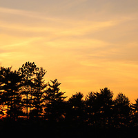 """""""Sunset in the Pines""""<br /> <br /> A wonderful setting sun all aglow between pine trees in silhouette!!<br /> <br /> Sunset Images by Rachel Cohen"""